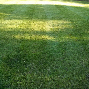 organic lawn harrisonburg va